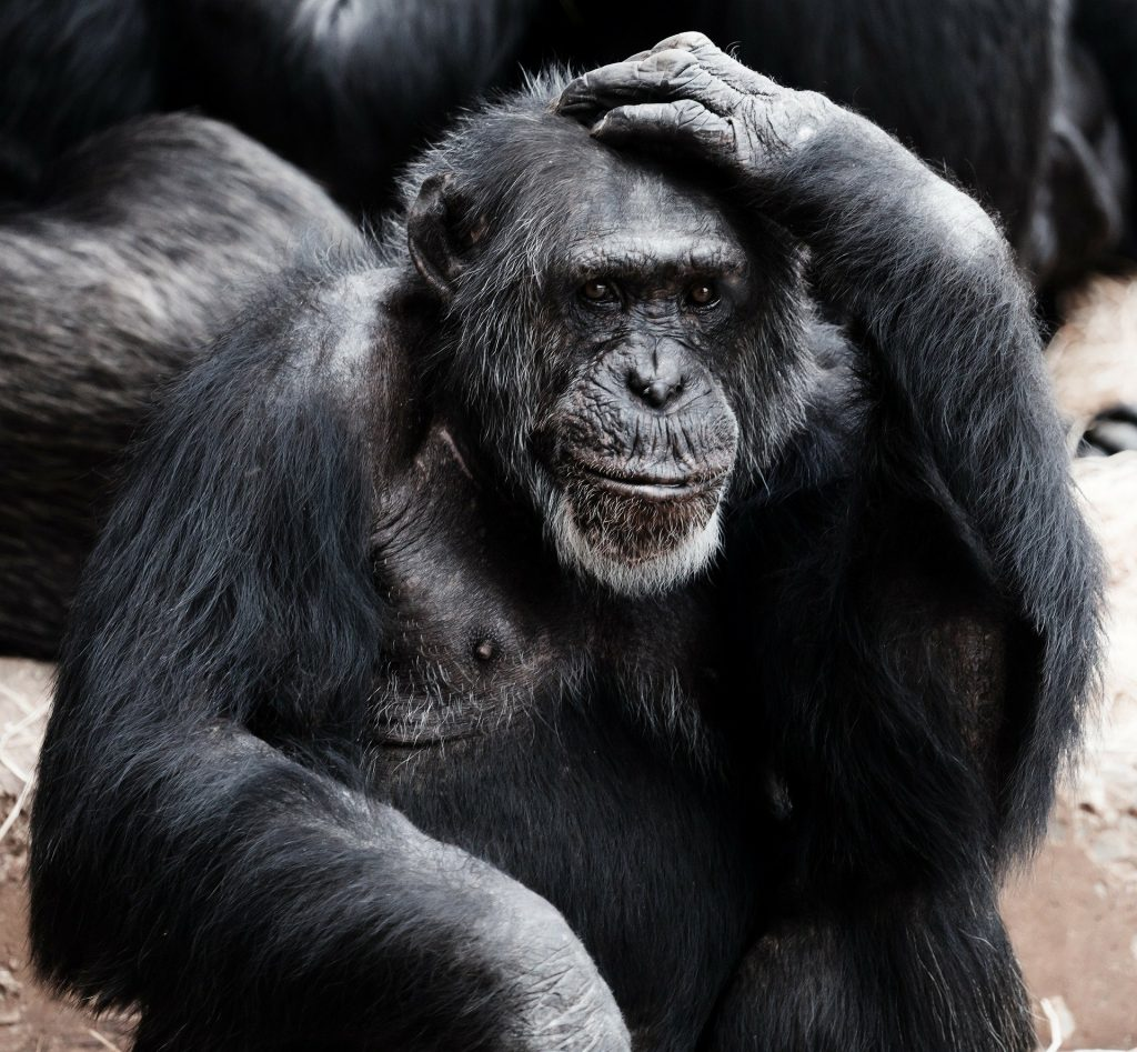 ape thinking